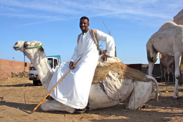 Kamelmarkt-Tagestour ab Kairo in kleiner Gruppe