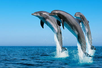 Swim with Wild Dolphins in Hurghada