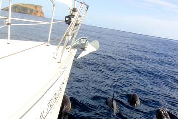 Excursão marítima de 2 horas pela...