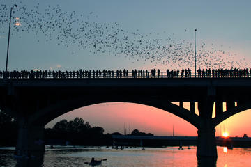Book Austin Bat Watching Bike Tour on Viator