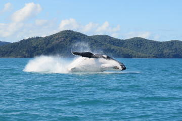 Whitsundays Whale Watching Cruise from Airlie Beach