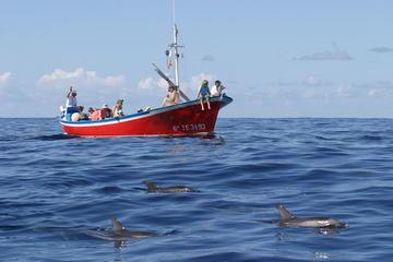 Avistamiento de ballenas y delfines...