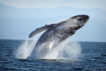 Private Whale Watching with a Biologist