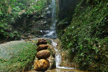 Tijuca Forest Hiking Tour Including...