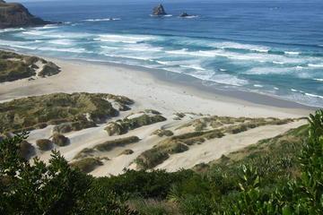 Shore Excursion: Personalized Tour of Dunedin