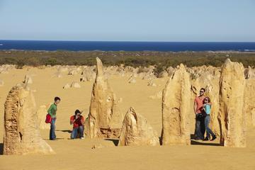 Pinnacles Day Trip from Perth Including Caversham Wildlife Park and Lancelin Dunes Sandboarding
