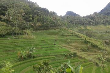 Java Village and Temple Tour from