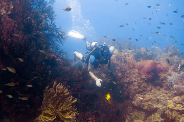 7-Night, 10-Dive Scuba Diving...