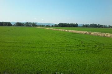 Safari nelle risaie con pranzo tipico e visita alla fattoria
