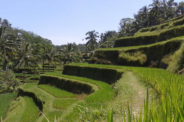 Ubud Cultural Day Tour: A Day for