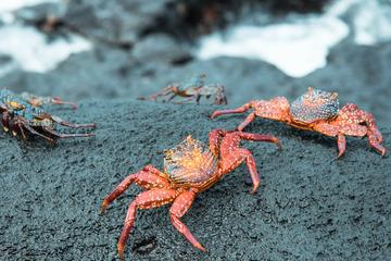 5- or 6-Day Galapagos Island Hopping Tour