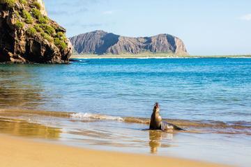 6-Day Galapagos Adventure Hiking Diving Snorkeling