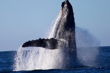 Private Whale Watching in Cabo San Lucas