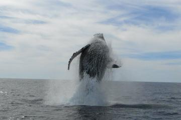 Whale Watching Expedition in Los Cabos