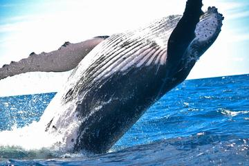Whale-Watching Expedition in Los Cabos
