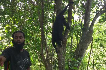 Altun Ha and Howler Monkey Sanctuary Tour