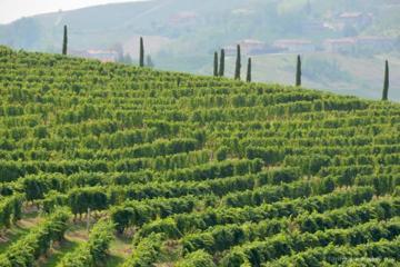 Monferrato-Weintour
