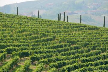 Tour enologico del Monferrato