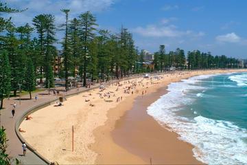 シドニー オペラ ハウスとノーザン ビーチを含…