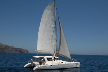 Dolphin and Whale Watching in a Luxurious Catamaran