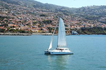 Madeira to Cabo Giro Dolphin, Whale...