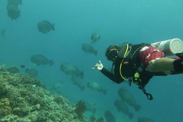 Descubra el submarinismo en las islas Gili
