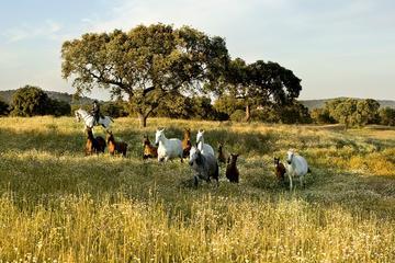Viagem diurna privada ao haras de cavalo Lusitano em Monte Velho...