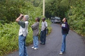Mile End Walking Tour from Ocho Rios