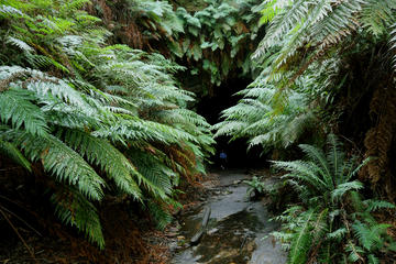 Sydney Glow Worm Tunnel and Lost City Small-Group Day Trip
