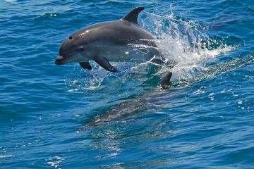 Dolphin watching in the wild