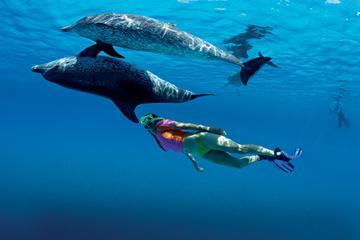 Nadar con delfines medio día