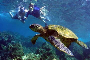 Turtle Reef Kayak Snorkel