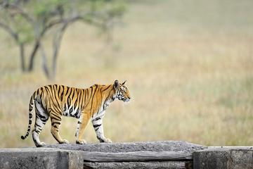6 Day Bandhavgarh Wildlife Tour