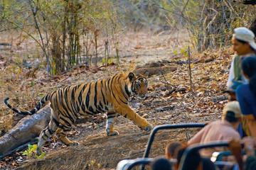7 Day Bandhavgarh Tour