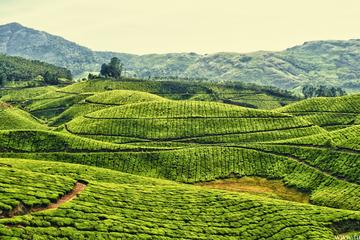 Amazing Kerala Trip
