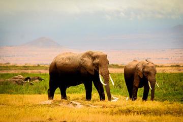 3-Day Amboseli Private Safari from Nairobi