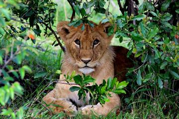 3-Day Masai Mara Private Safari from...