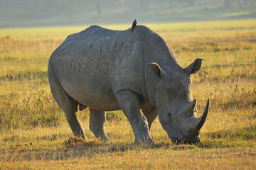 4-Day Masai Mara and Lake Nakuru Private Safari from Nairobi