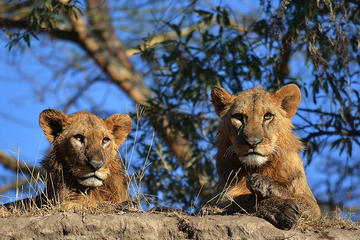 4-Day Masai Mara and Lake Nakuru...