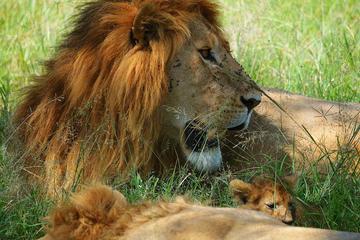 Safari guiado de 3 días en Masai Mara...