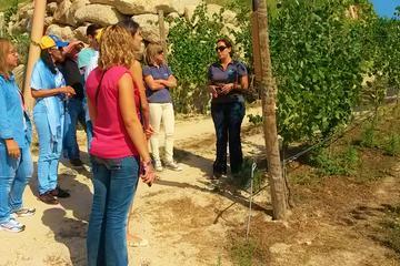 Excursão vinícola e degustação de vinhos em uma propriedade de Vinho...