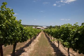 Day Trip Winery Tour and 3-Course Meal with Wine in Marble Falls near Marble Falls, Texas