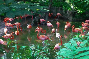 Billet d'entrée pour les Jardins d'Ardastra, le zoo et le centre de...