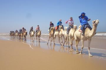 Promenade de 6heures à dos de chameau à Essaouira, avec pique-nique