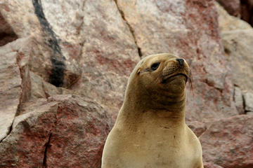 Ballestas Islands Group Tour from...