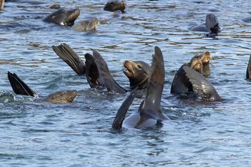 Palomino Islands Sightseeing Cruise Including Swim