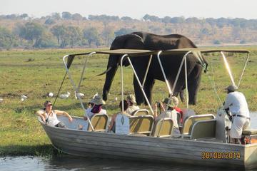 Viagem diurna de Chobe saindo de...