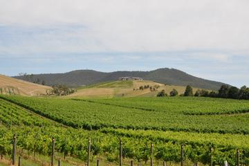 Private Tour to Mount Dandenong and Yarra Valley