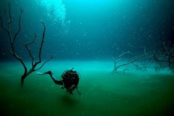 Tour de submarinismo en los cenotes Angelita y Casa desde Playa del...