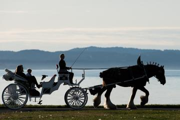 75-Minute Grand Horse-Drawn Carriage Tour